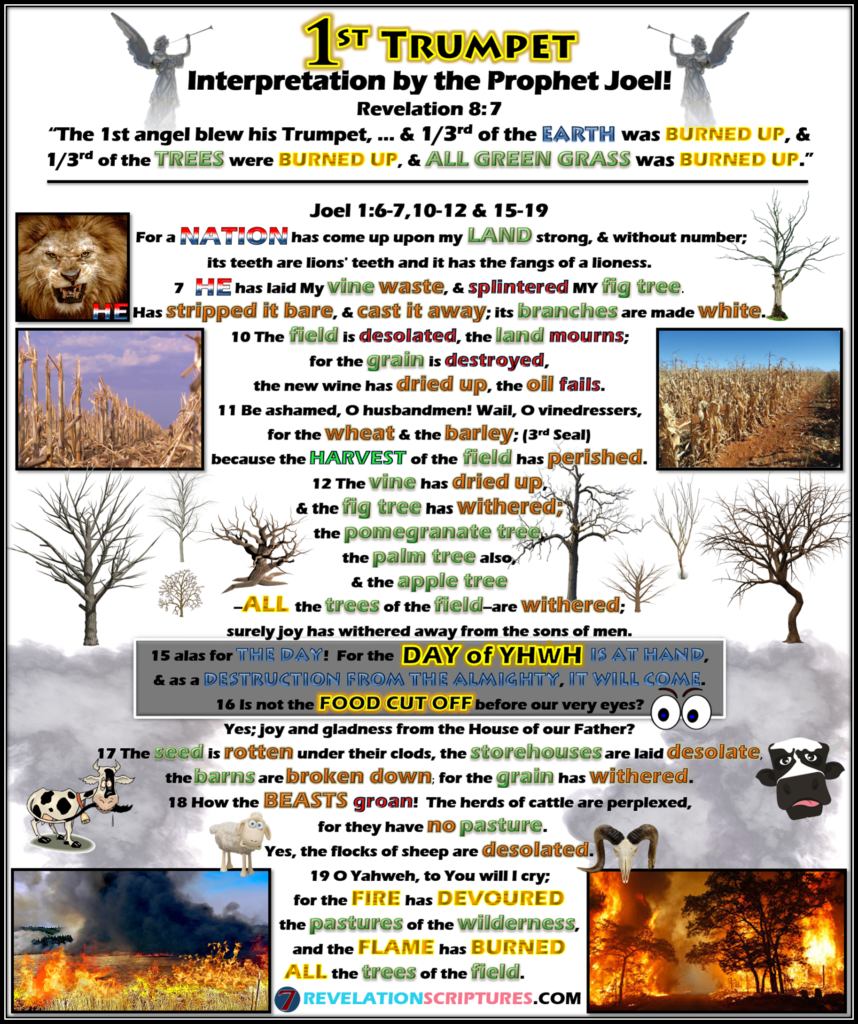 First Trumpet,Day of the Lord,YHWH,Joel,Biblical Prophet,Prophet,Joel 1,Joel Chapter 1,1st Trumpet,trumpet 1,trumpet one,Interpretation,Biblical,Scriptural,scriptural interpretation,1st Trumpet,Hail,Fire,Blood,All Grass Burnt,Green Grass,Grass,burnt up,Third Trees Burnt,1/3rd trees,1/3 trees,Third Earth,1/3rd earth,1/3rd earth,Burnt,Seven Trumpets,Book of Revelation,Revelation 8,Revelation Chapter 8,Apocalypse,what does the bible say,bible prophecy,prophecy
