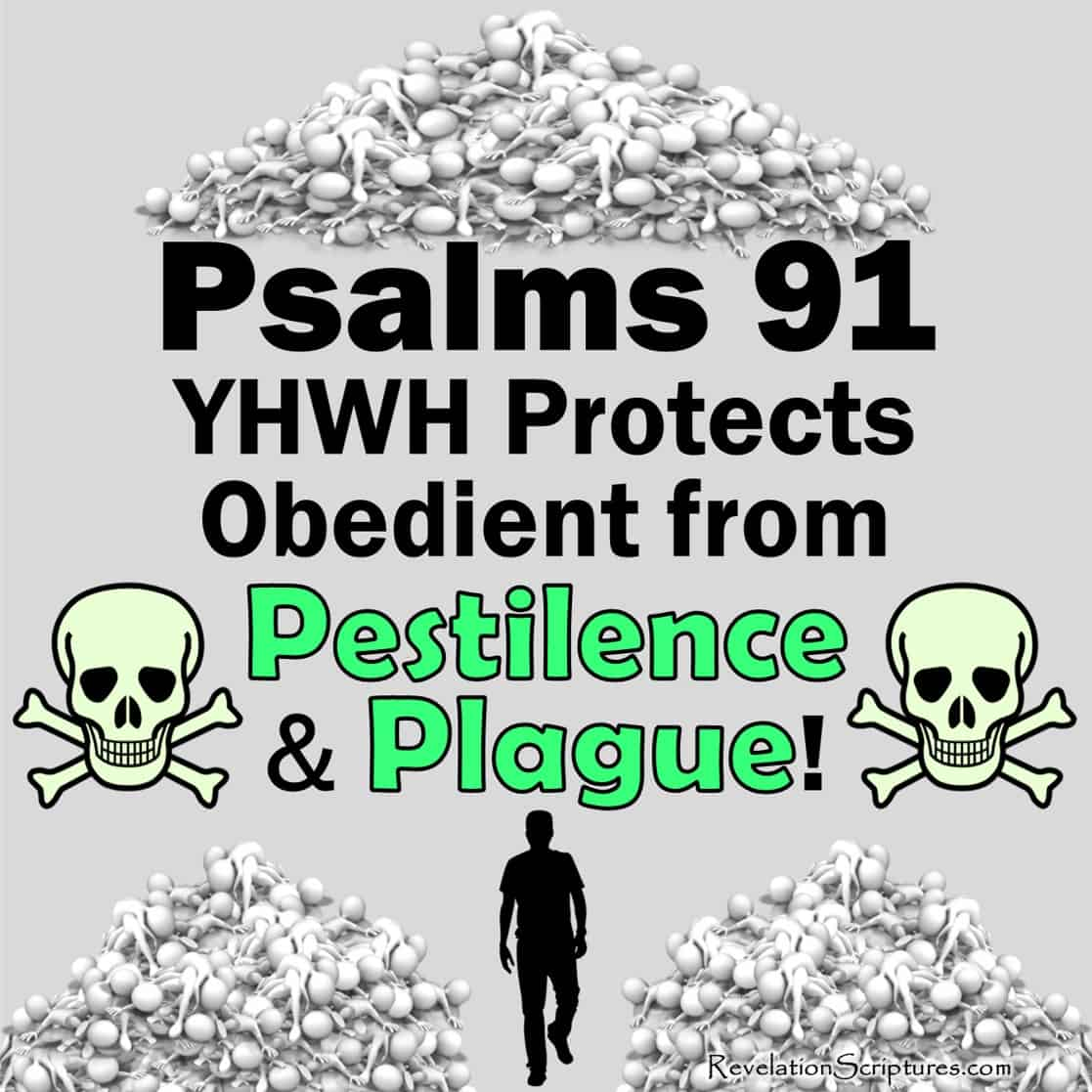 Pestilence,plague,disease,death,virus,CDC,infectious disease,pandemic,infection,pandemic,bacteria,coronaviruses,bubonic plague,Black Death,the Plague,curses,curses disobedience,plague disobedience,disobedience,commands,cure,outbreak,great plague,Psalms 91,protection from disease,protection from plague,protection from disease,angelic protection,cover with feathers,thousand fall at your side,ten thousand at your right hand,destructive plague,protection of the most high,He that dwelleth in the secret place of the most High, shall abide under the shadow of the Almighty,I will say of the Lord,He is my refuge and my fortress,my God,in him will I trust,he shall deliver thee,snare of the fowler,noisome pestilence,He shall cover thee with his feathers,and under his wings shalt thou trust,his truth shall be thy shield and buckler,Thou shalt not be afraid,for the terror by night,nor for the arrow that flieth by day,Nor for the pestilence that walketh in darkness,nor for the destruction that wasteth at noonday,A thousand shall fall at thy side,ten thousand at thy right hand,but it shall not come nigh thee,Only with thine eyes shalt thou behold,see the reward of the wicked,Because thou hast made the Lord,which is my refuge,even the most High,thy habitation,There shall no evil befall thee, neither shall any plague come nigh thy dwelling,For he shall give his angels charge over thee,to keep thee in all thy ways,They shall bear thee up in their hands, lest thou dash thy foot against a stone,Thou shalt tread upon the lion and adder,the young lion and the dragon,trample under feet,Because he hath set his love upon me,therefore will I deliver him,I will set him on high,because he hath known my name,He shall call upon me,I will answer him,I will be with him in trouble,I will deliver him,honour him,With long life will I satisfy him,and shew him my salvation,He who dwells in the shelter of the Most High,will abide in the shadow of the Almighty, I will say[a] to the LORD,My refuge and my 